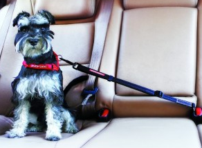EzyDog adjustable dog seat belt