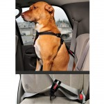 Safety and dog seatbelt restraints – Buckle up!