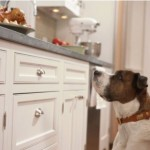 5 tips for keeping your dog (and your home) safe during the holidays