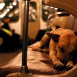 Dog-friendly train travel