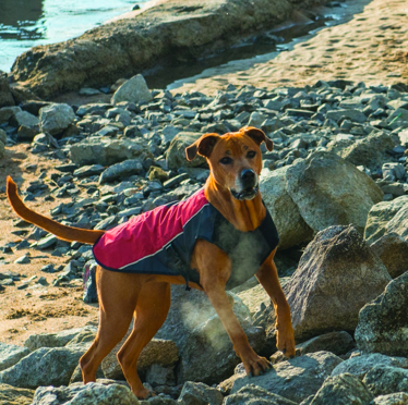 EzyDog Element Jacket with dog wearing it at the beach