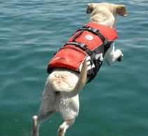 EzyDog Floation Vest with dog wearing it