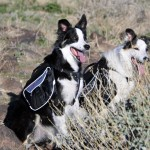 Planning a trip? Let Daisy carry her folding dog bowl with an EzyDog dog backpack