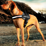 What to Look for in a Dog Harness