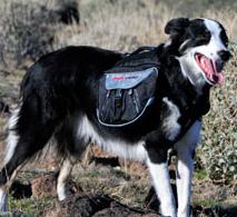 Dog wearing an EzyDog Summit backpack