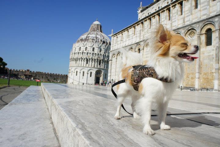Montecristo Travels Pisa