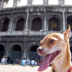 Dog at The Coloseum in Rome