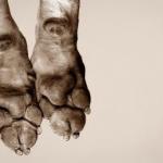Dog's feet close-up