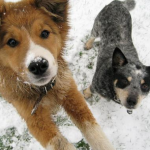 How to protect your dog's paws on winter walks