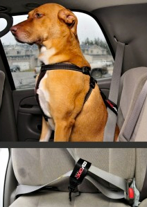 Safety dog restraint and harness