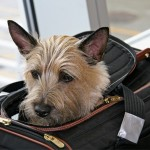 How to get through airport security with your dog