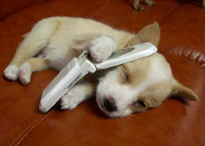 dog with cell phone
