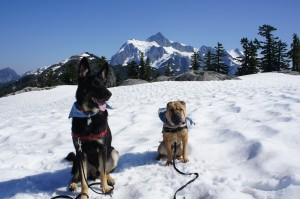 Go Pet Friendly - Dogs - Ty and Buster