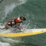 The Right Life Vest for Small Dogs