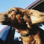 Dog Seat Belts and Other Travel Tips