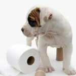 Dog Housetraining Tips