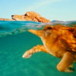 Water Safety Beyond a Dog Life Preserver