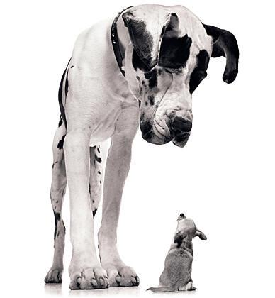 small dog and large dog