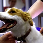 Dog Leash Training and Microchipping