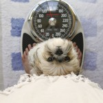 Helping Your Overweight Dog Stay Fit