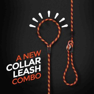 dog collar leash combo