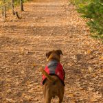 Fall Essentials – Fall Dog Gear