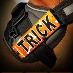 Trick-or-Treating Gear for Dogs
