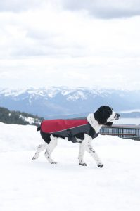 element dog jacket