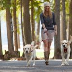 Double Dog Walking Solutions