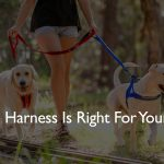EzyDog Harnesses